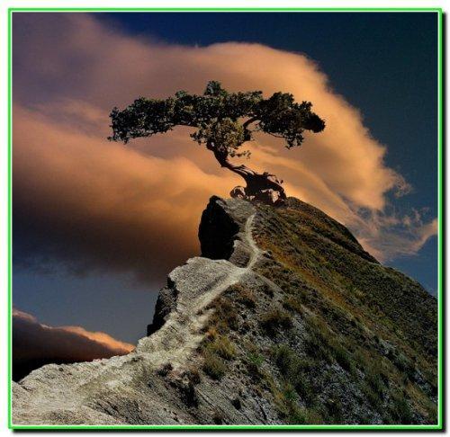 Старе столітнє дерево