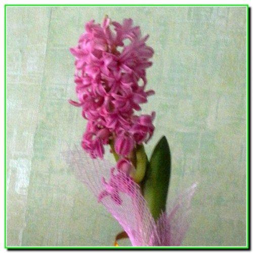 Декоративні квіти для дизайну