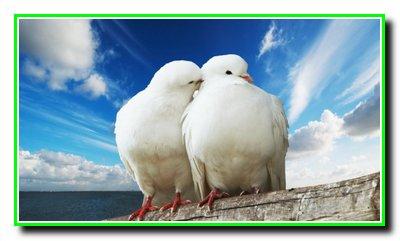 365 + 1 правило справжньої любові. Частина 31