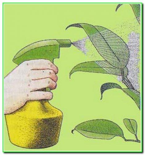 Боротьба з шкідниками роcлин природними засобами