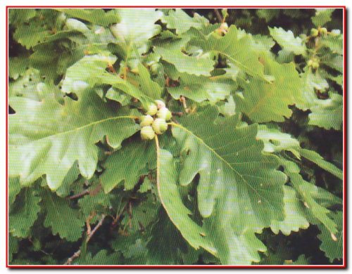 Бритавський ботанічний заказник
