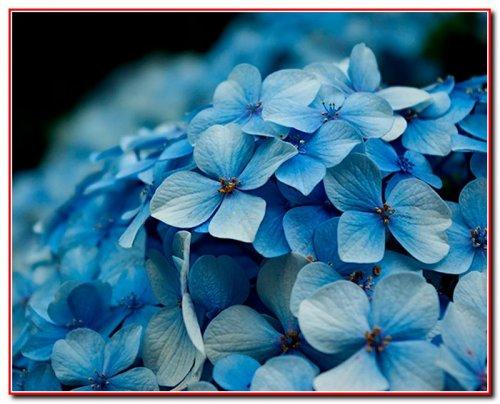 Найдорожчі в світі квіти