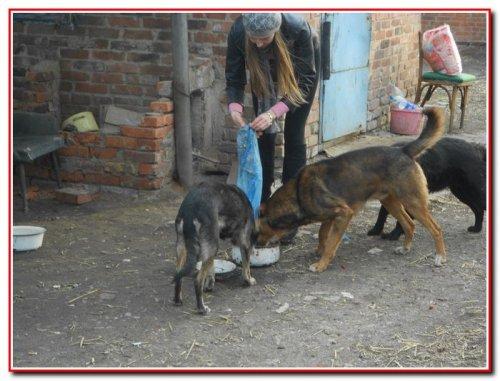 Безпритульні тварини м. Слов'янська