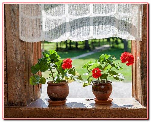 Енергетика кімнатних рослин