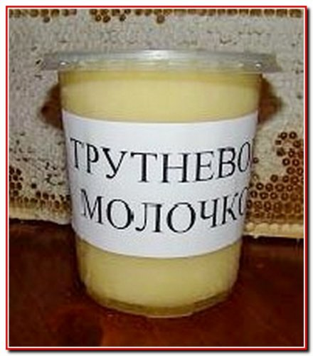 Трутневе  молочко (гемогенат).  Корисні властивості та рецепти застосування